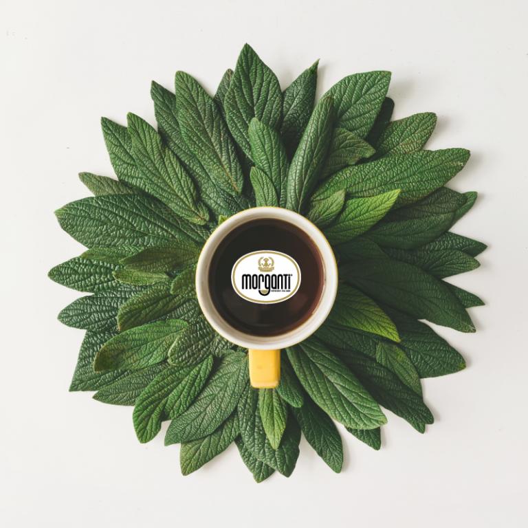 Caffè Biologico: perché diffondere il gusto sostenibile e responsabile